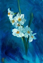 42. Lawrence Costa (Narcissi) 1